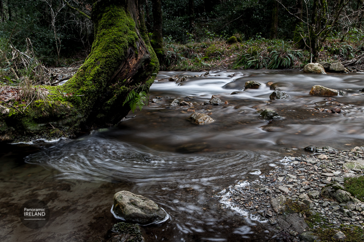 A Wicklow stream in winter, green and atmospheric