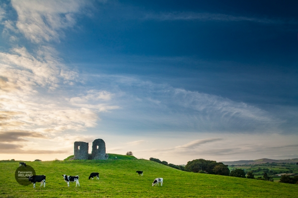 Castles and cows, Harry Avery's Castle, County Tyrone