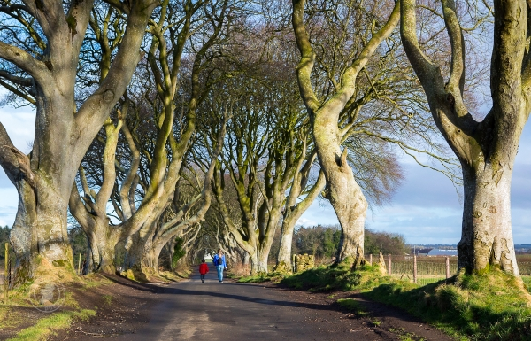 Woman and boy walk along the Dark Hedges in County Antrim, Northern Ireland