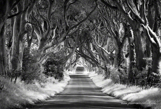The Dark Hedges, Northern Ireland's most famous road