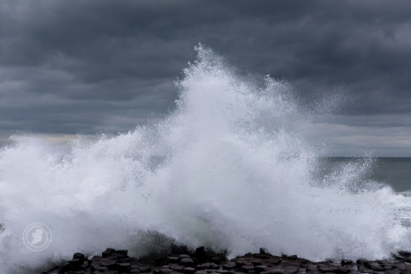 Storm wave crashing, the power of the Atlantic at Northern Ireland's Giant's Causeway