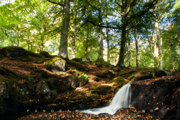 Flowing Water in the Woodland, Ireland