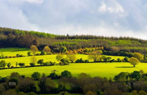 Green Hillsides of Spring in Ireland