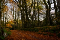 Autumn Gives Way to Winter, Colourful Irish Lanes