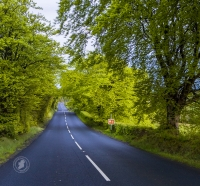 On the road in Ireland, green trees line the undulating tarmac roads