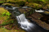 The woodland stream and waterfall, end of spring in Ireland