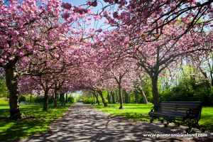 panoramic-ireland-dublin-photo-tours-blossom-park